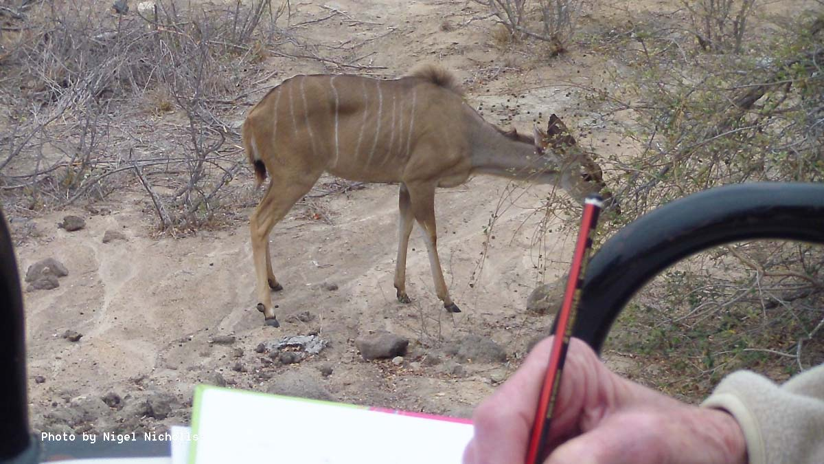 Sketching Kudu at Africa on Foot