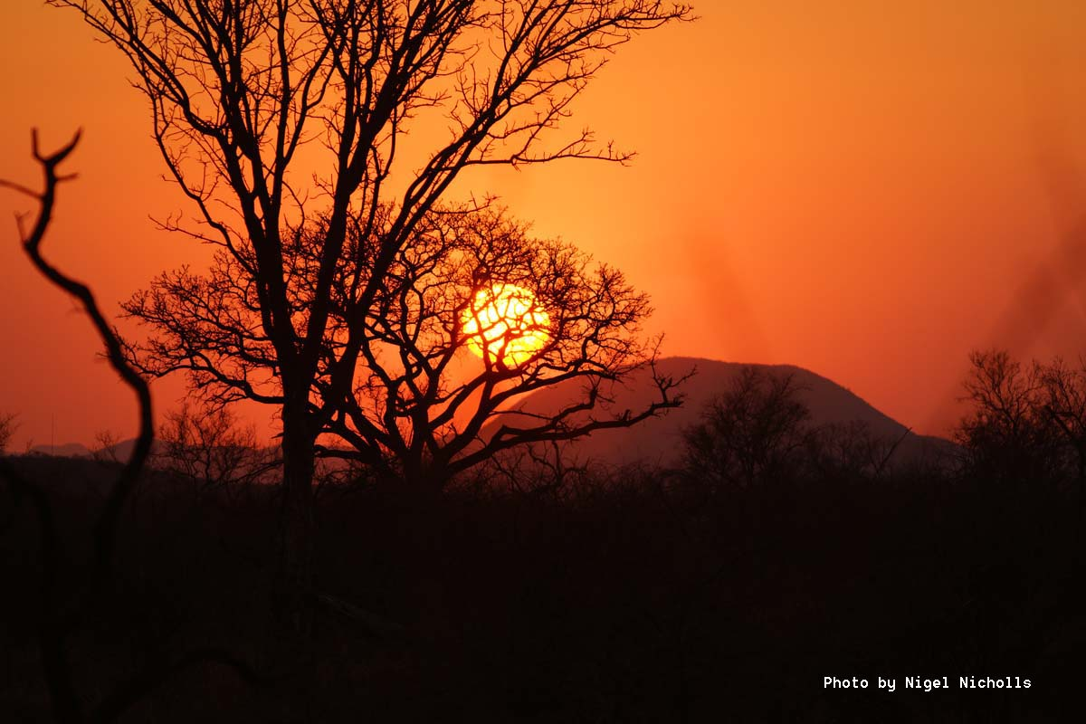 Sunset, Madikwe Game Reserve