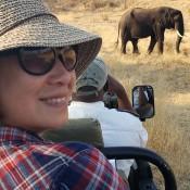 Alison Nicholls Art Safari