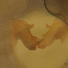 Against the Sun (white rhinos) © Alison Nicholls
