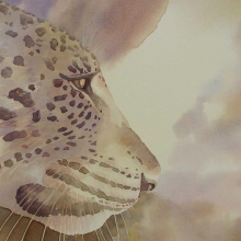 Leopard - Patience © Alison Nicholls