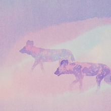 Moonrise (African wild dogs) © Alison Nicholls