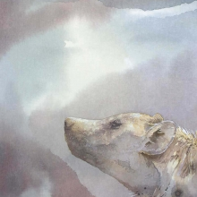 Spotted Hyena - Night Scent © Alison Nicholls