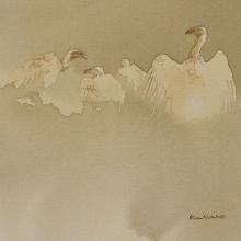 White-backed Vultures © Alison Nicholls