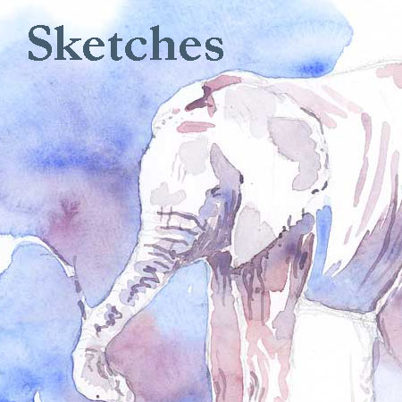 Field Sketches by Alison Nicholls