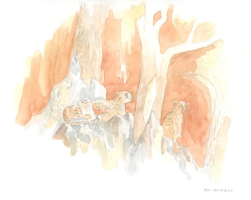 Cheetah Dawn Field Sketch © Alison Nicholls 2015