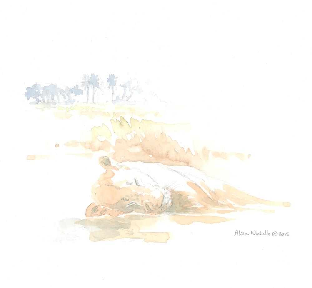 Lioness Asleep Field Sketch © Alison Nicholls 2015