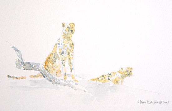 Cheetah field sketch by Alison Nicholls