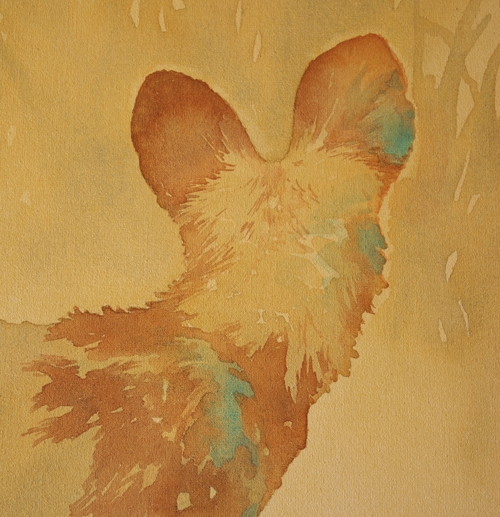 Painted Dog (African wild dog) playing, by Alison Nicholls ©2015