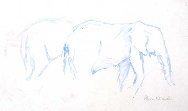 Elephant sketch by Alison Nicholls ©2015