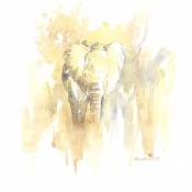 Sunlit Elephant © Alison Nicholls