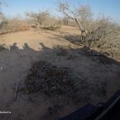 Art Safari Shadows
