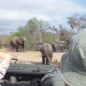 Sketching Elephants at Africa on Foot