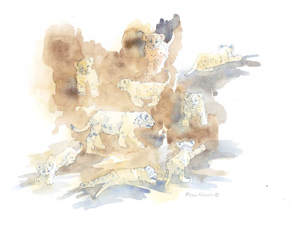 Lion Cubs Field Sketch