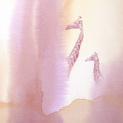 Giraffes Gazing