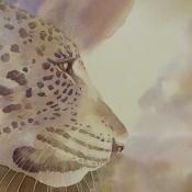 Leopard - Patience by Alison Nicholls