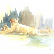 Lioness and Cubs Field Sketch by Alison Nicholls