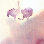 Ostriches-in-purple-by-Alison-Nicholls