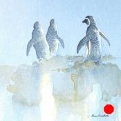 African-Penguins-AlisonNich