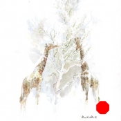 Giraffes Browsing Shepherds Tree by Alison Nicholls