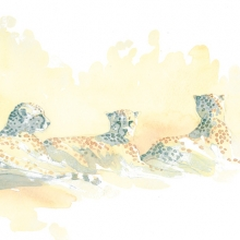Cheetah Trio by Alison Nicholls©