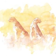 Serengeti Cheetahs by Alison Nicholls©
