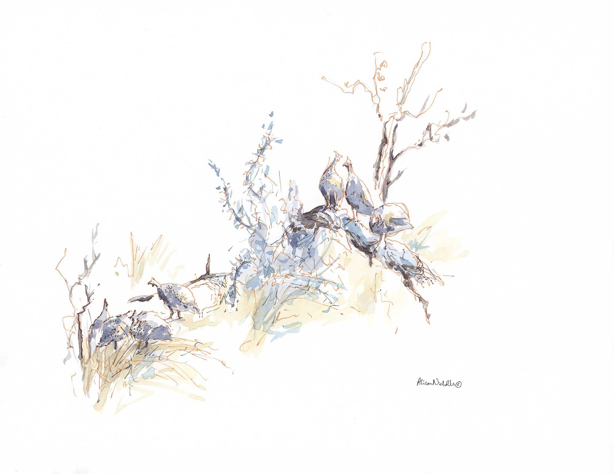Guineafowl Flock © Alison Nicholls