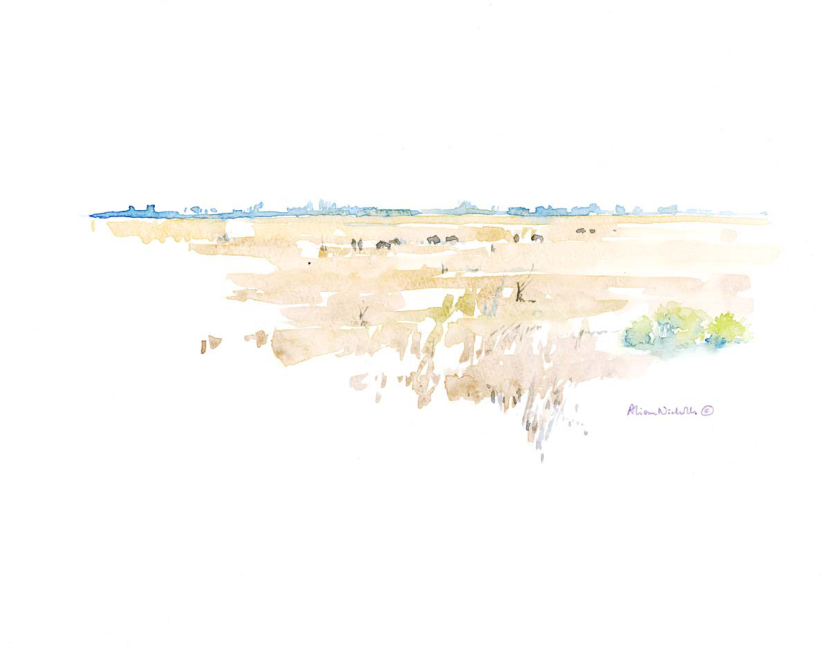 Savute Marsh  © Alison Nicholls