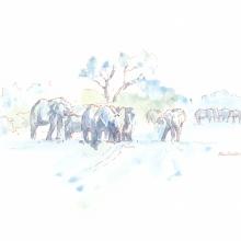 Elephants in Riverbed © Alison Nicholls