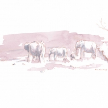 Elephants in Pink and Gray © Alison Nicholls
