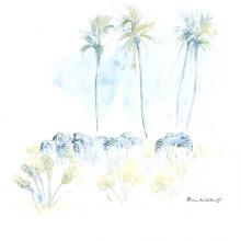 Zebra Palms © Alison Nicholls
