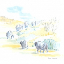Elephant Herd by Alison Nicholls©