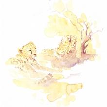 Restful (cheetahs) Alison Nicholls ©