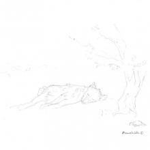 Spotted Hyena © Alison Nicholls