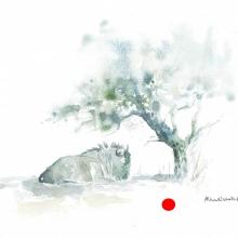 Wildebeest in Shade by Alison Nicholls