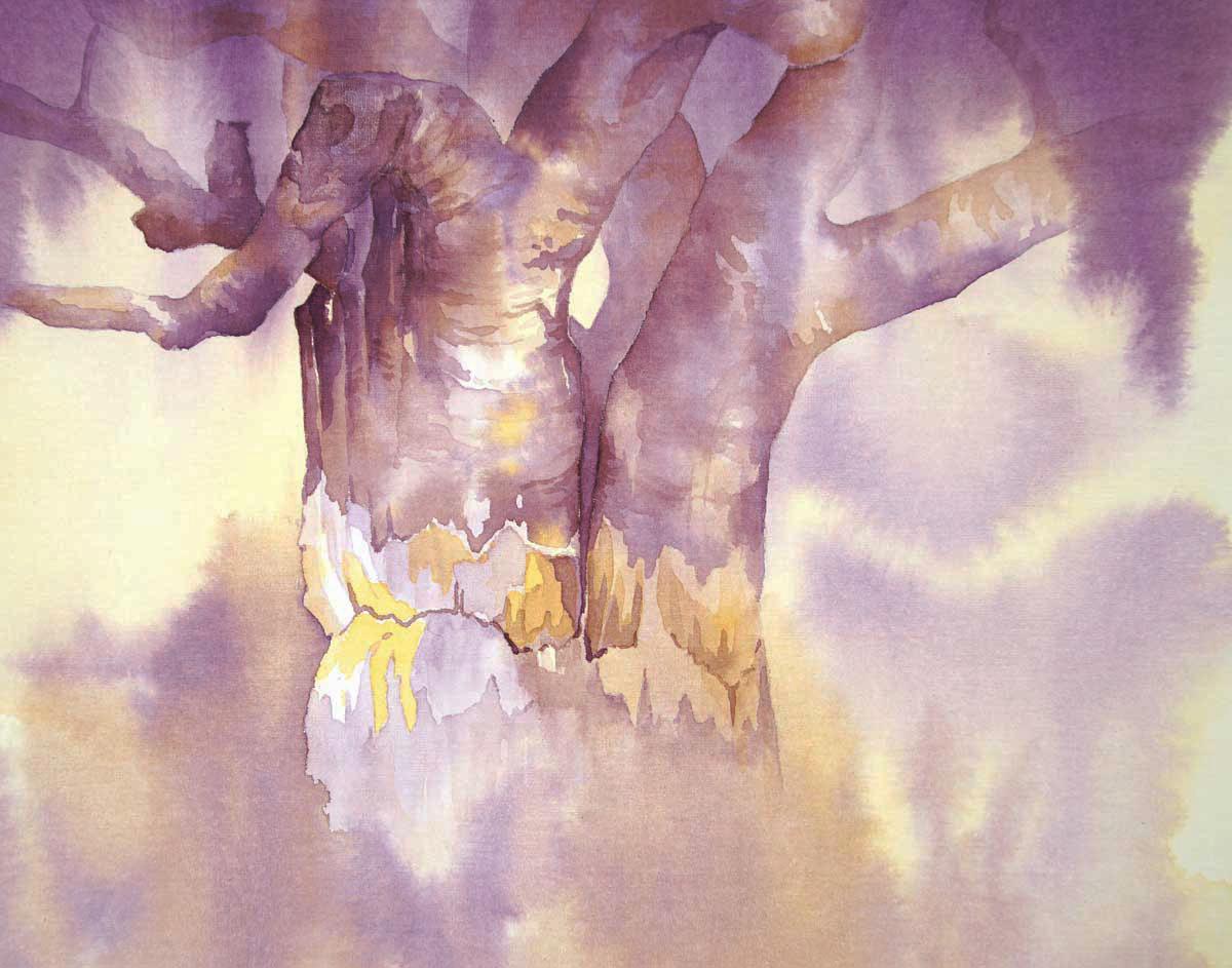 Owl & Baobab