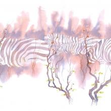 Zebras In Mopane © Alison Nicholls