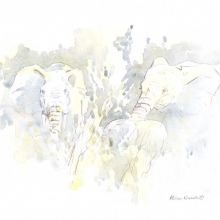 Elephants in Gray Sketch by Alison Nicholls ©