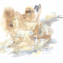 Lion Cubs Field Sketch by Alison Nicholls ©