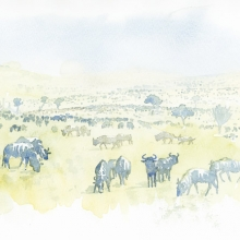 Migration Field Sketch © Alison Nicholls