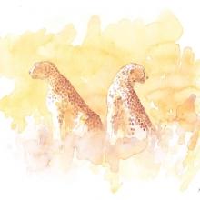 Serengeti Cheetahs Field Sketch © Alison Nicholls
