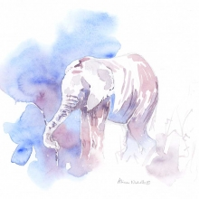 Elephant Calf Field Sketch by Alison Nicholls ©