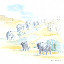 Elephant Herd Field Sketch by Alison Nicholls©