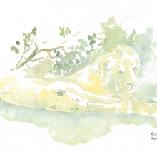 Powernap Field Sketch © Alison Nicholls