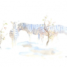 Zebra In Mopane Field Sketch by Alison Nicholls ©2015