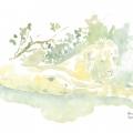 Powernap Field Sketch © Alison Nicholls