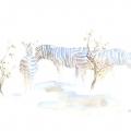 Zebra In Mopane Field Sketch by Alison Nicholls ©2015