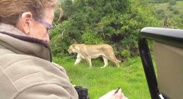 Sketching lions in South Africa on an Africa Geographic Art Safari