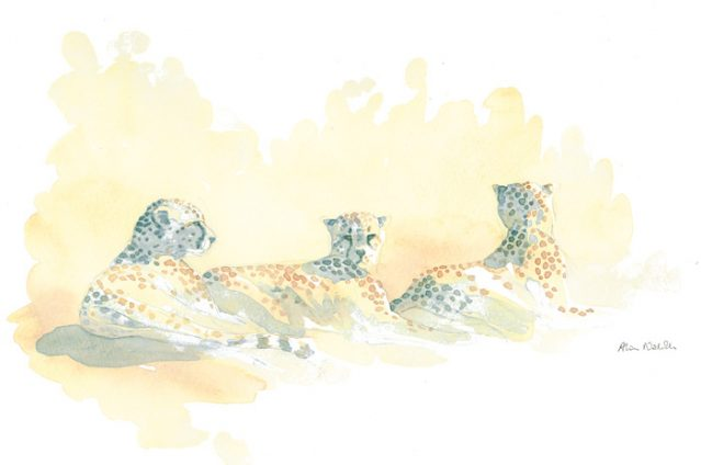 Cheetah Trio by Alison Nicholls