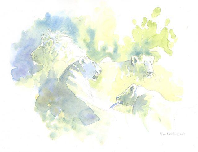 Lion Pride Field Sketch © Alison Nicholls 2015